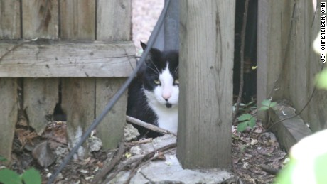 In Chicago, cats keep the rats out of people's yards, too.