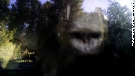 NS Slug: CO: DEPUTIES FREE BEAR LOCKED IN CAR  Synopsis: Law enforcement tries to free bear stuck in car in Colorado  Keywords: COLORADO JEFFERSON COUNTY BEAR