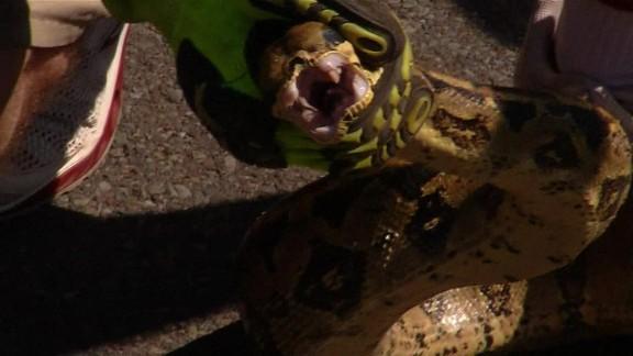 Snake crawls into SUV in Pennsylvania_00012410.jpg