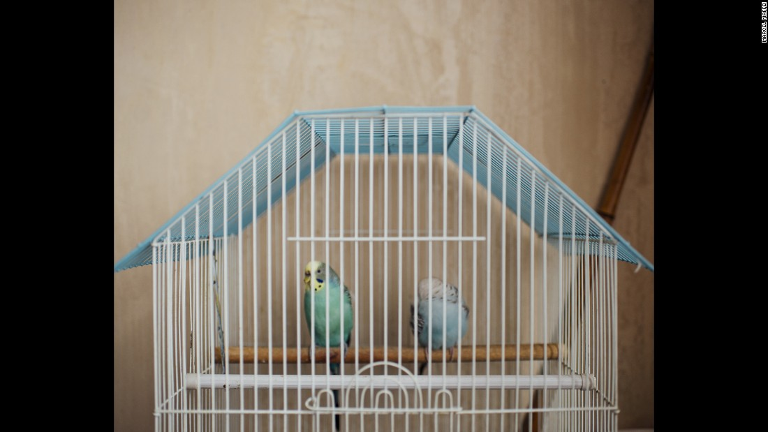 These are Natali's birds, and Maffei thought the cage was sort of a metaphor for the whole settlement.