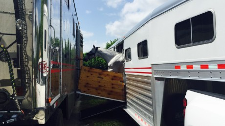 High-end horses: The ultimate jet setters