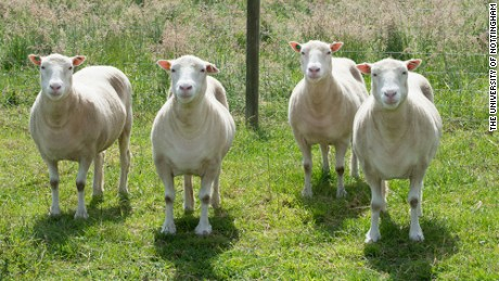 20 years after Dolly the sheep, potential of cloning remains unclear