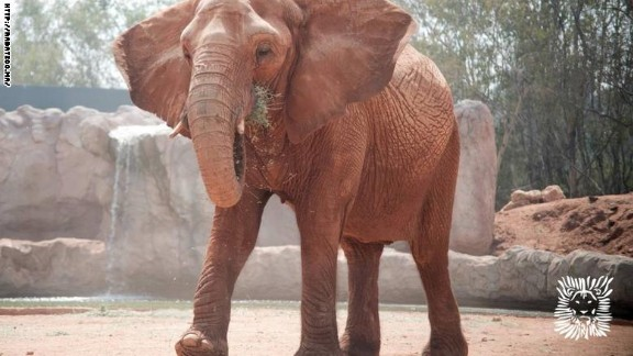 Elephants at Rabat zoo are kept behind a wooden enclosure and ditch