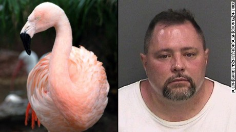 Pinky the flamingo dies after attack by Busch Gardens guest, officials say