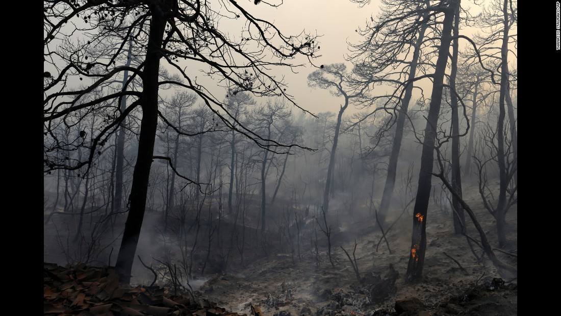 A tree burns in the Greek village of Limni on Monday, August 1. A forest fire raged for days on the island of Evia.