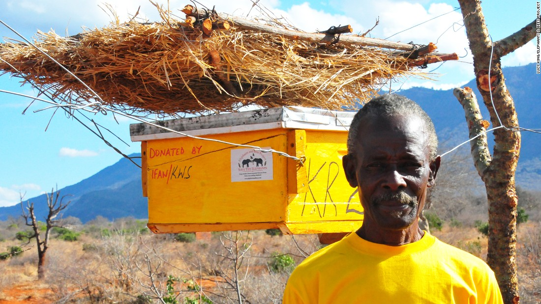 King's solution, the beehive fence, combines real and dummy beehives full of African honey bees. Triggered by a simple wire fence the hives are disturbed, swinging and releasing irate bees upon elephants.