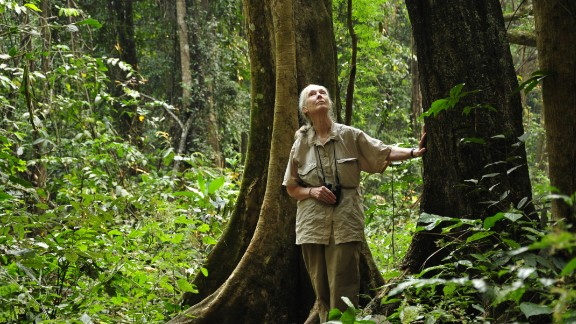 World-renowned primatologist Jane Goodall