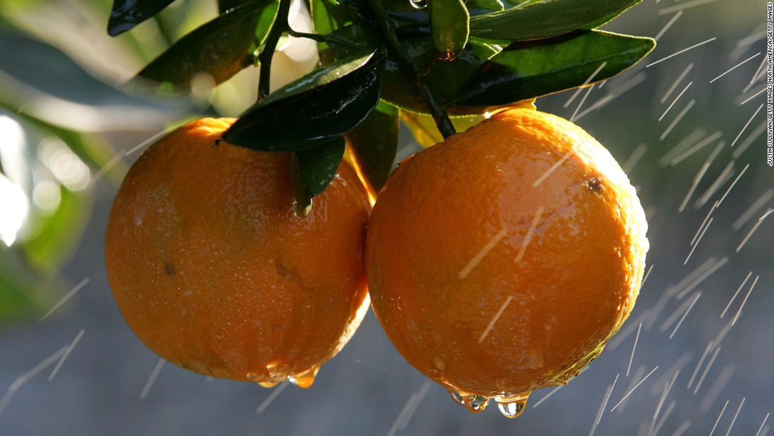 The polymer uses orange peel and avocado skins, which combine to form a material that can store hundreds of times its weight in water, creating reservoirs that would allow farmers to maintain their crops through droughts.
