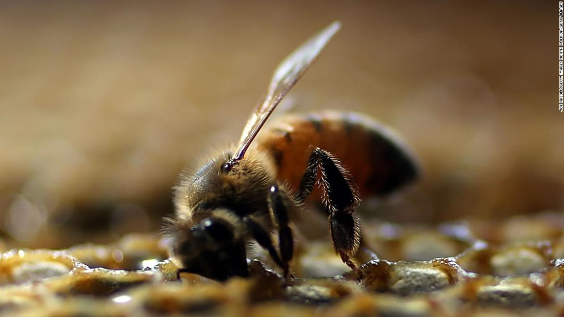 Bees are better at math when they're punished for the wrong answer, a new study finds