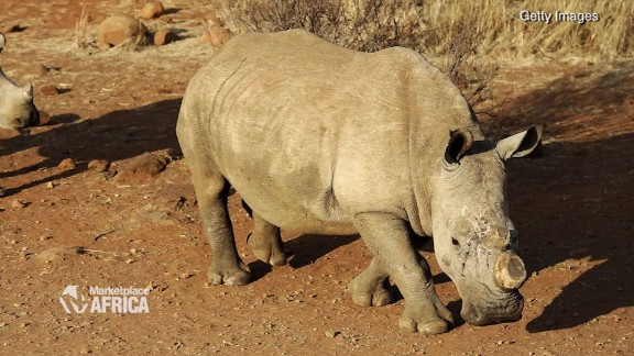 rhino poaching price horn marketplace africa spc_00033228.jpg