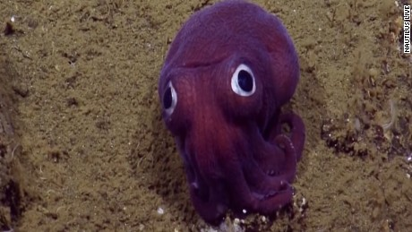 Scientists spot 'googly-eyed' creature