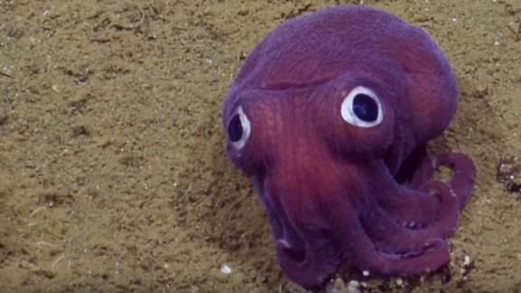 The exploration vessel Nautilus earlier found an interesting squid specimen.