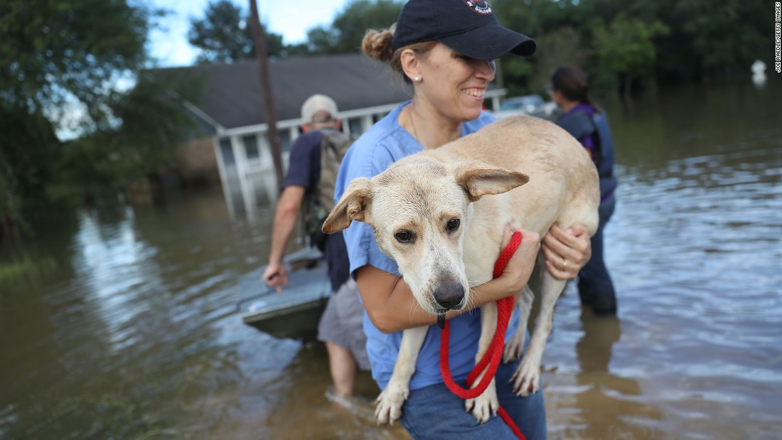 Ann Chapman, from the Louisiana State Animal Response Team, carries a dog she helped rescue in Baton Rouge on August 15.