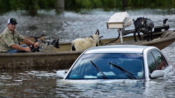 A man navigates a boat of rescued goats past a partially submerged car after flooding on August 16, 2016 in Gonzales, Louisiana.