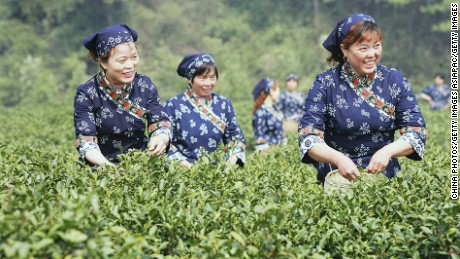 Tea pickers in the outskirts of Hangzhou of Zhejiang Province, China.