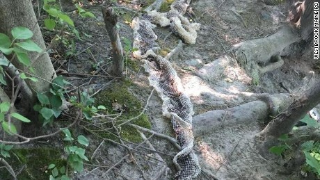 10 foot snake on the loose in small Maine town, locals name it