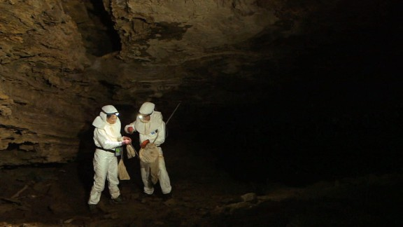 Bats are considered the most likely natural host, given that they overlap with humans geographically and can carry Ebola infection without symptoms. Pictured, virus hunters have been tracking bats inside Grootboom cave near Johannesburg.