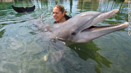 ban on swimming with dolphins is proposed cnn