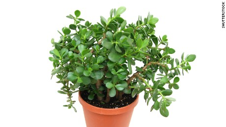 Healthy Houseplants That Can Purify Indoor Air