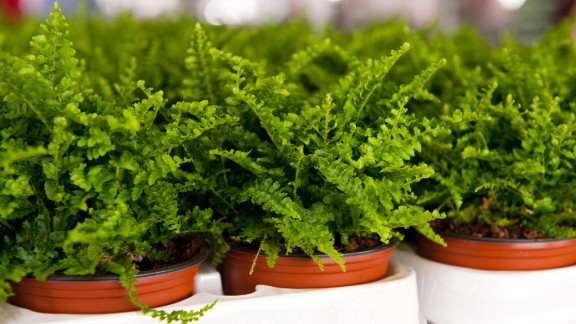 If the air in your home is too dry, you may want to get some ferns. These plants are good at increasing air humidity.