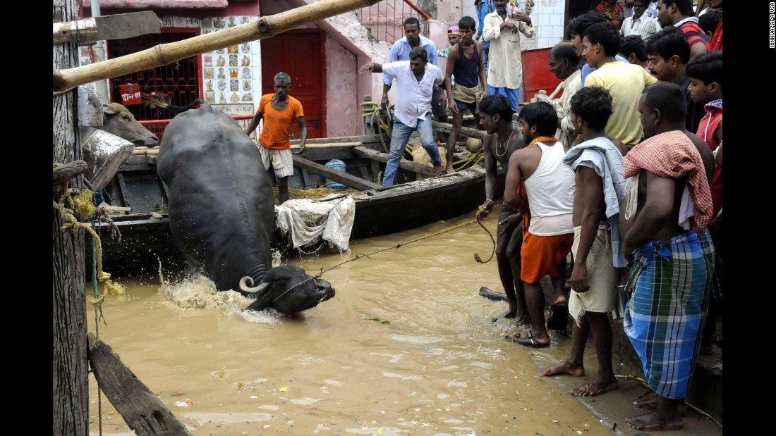 "People use a boat to transfer an ox near Patna, capital of the eastern Bihar state in India, on Saturday, August 20. <a href=""http://www.cnn.com/2016/08/22/asia/india-minister-floods-madhya-pradesh/"" target=""_blank"">Heavy monsoon rains</a> in several states across the eastern and central parts of the country have displaced tens of thousands and caused rivers, including the Ganges, to overflow."