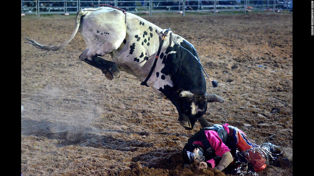 Matt Boland covers himself up after falling off a bull in Cunnamulla, Australia, on Saturday, August 27.