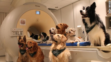 How do dogs process language? Scientists scan their brains to find out