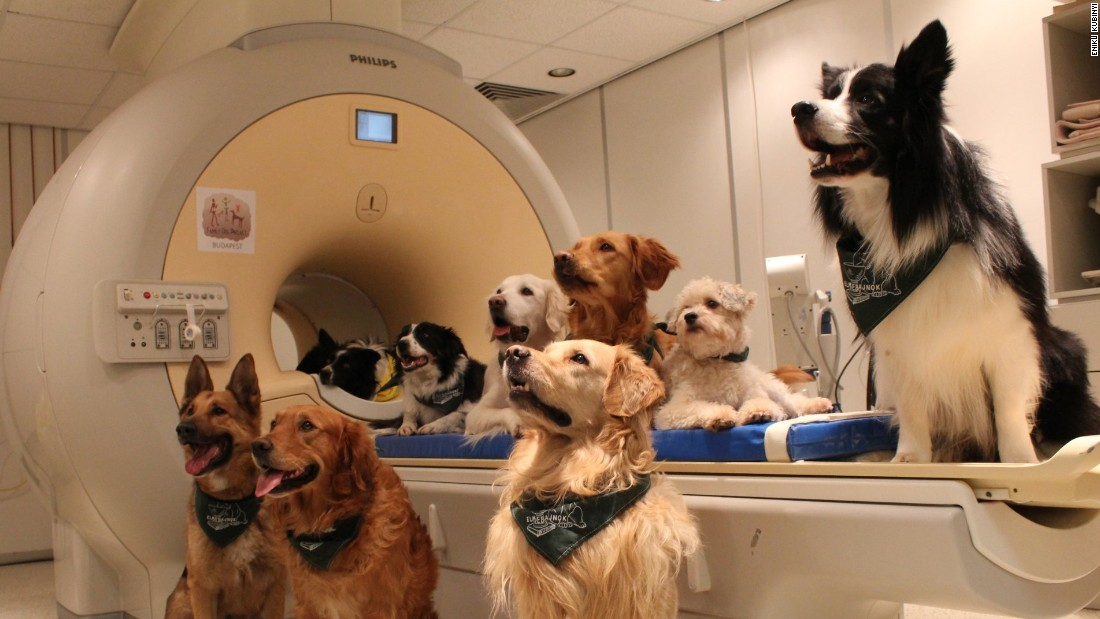 The trained dogs sit around the MRI scanner and listen to their trainer.