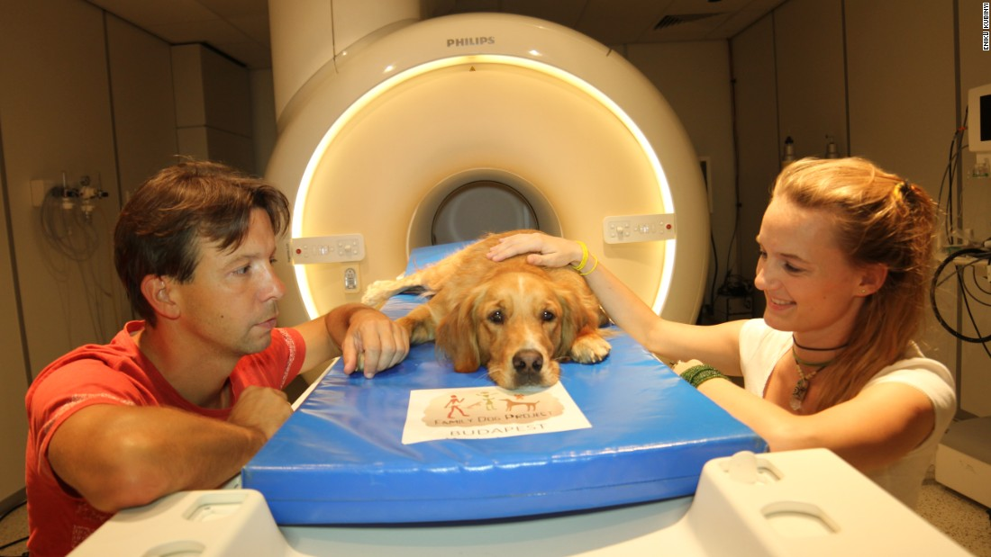 Researchers Attila Andics (on left) and Anna Gábor (on right) sit with the dog, Barack, during the study.