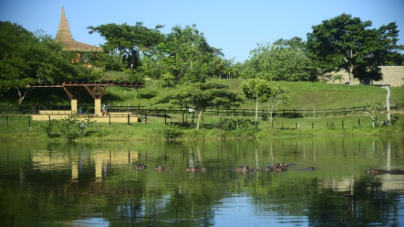 Escobar's ranch included 27 artificial lakes, swimming pools, an airstrip, a gas station, 1,700 employees -- and four hippos the drug kingpin bought from a US zoo. They have since bred and now number in the dozens.