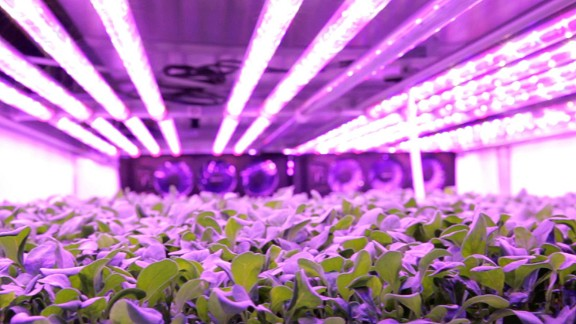 A massive indoor vertical farm is about to open in the US and it grows baby leaves and herbs using a method which requires no sunlight or soil and next to no water.