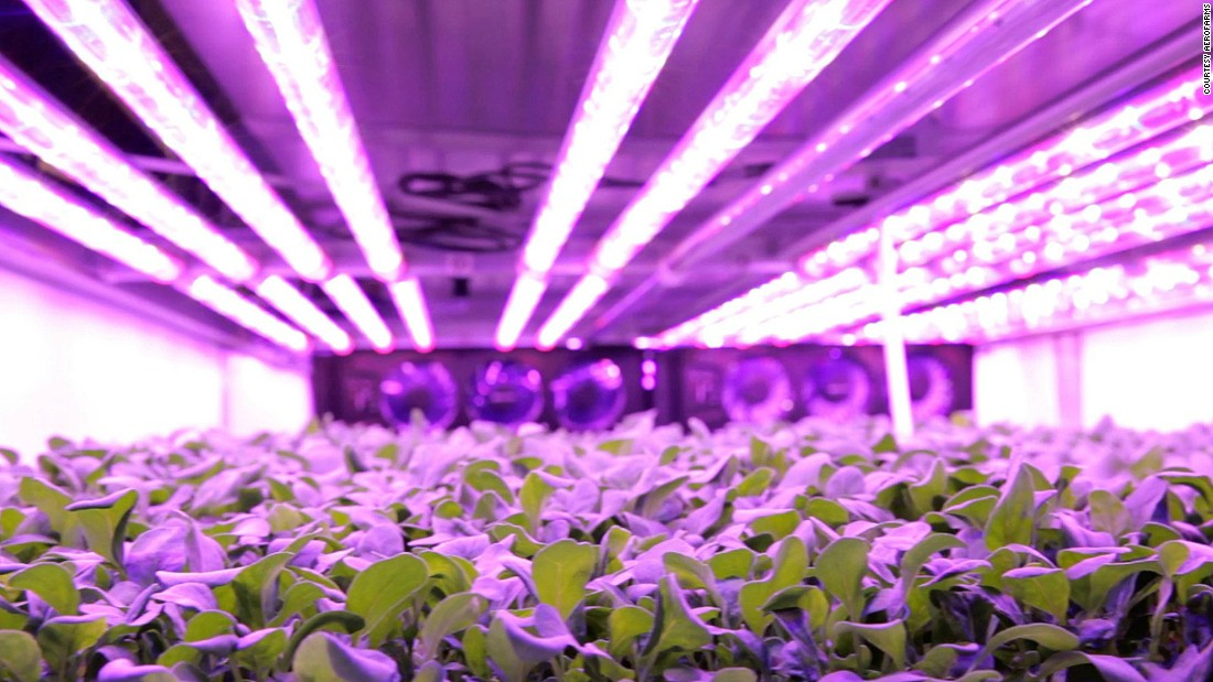 A massive indoor vertical farm is about to open in the US and it grows baby leaves and herbs using a method which requires no sunlight or soil and next to no water.<br />