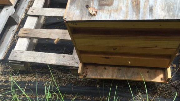 Juanita Stanley says she lost more than 3 million bees.