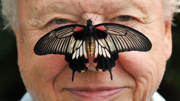 Big Butterfly Count. Butterfly Conservation President Sir David Attenborough with a south east Asian Great Mormon Butterfly on his nose, as he launched the Big Butterfly count at the London Zoo in Regent