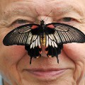 david attenborough butterfly