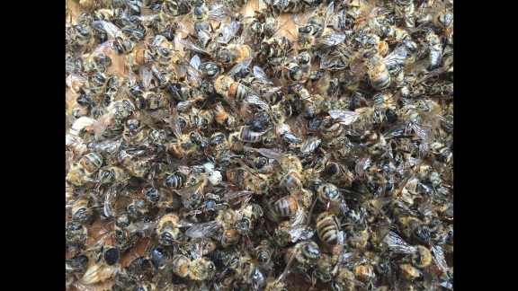 Millions of honeybees were killed in South Carolina when mosquito control officials didn't notify a local beekeeper of aerial spraying to control possible Zika-carrying mosquitoes.