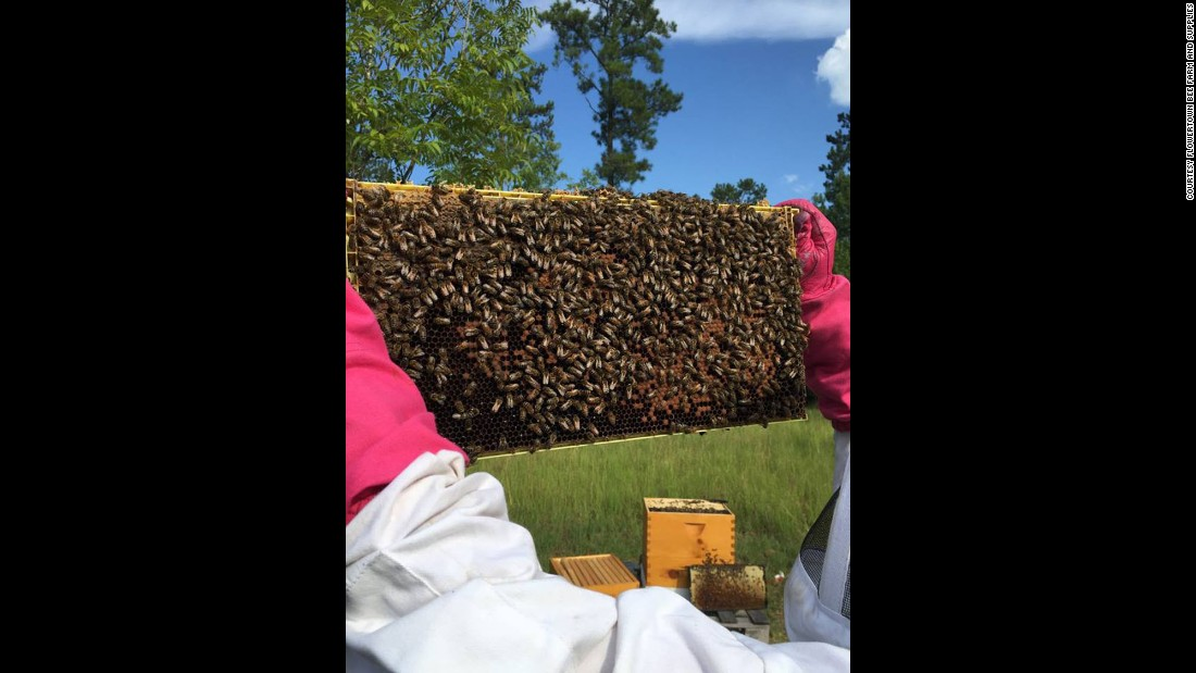 "This is what a hive looked like just before the spraying, said Juanita Stanley, co-owner of <a href=""https://www.facebook.com/Flowertown-Bee-Farm-and-Supplies-169371146803372/?fref=ts"" target=""_blank"">Flowertown Bee Farm and Supply</a>."