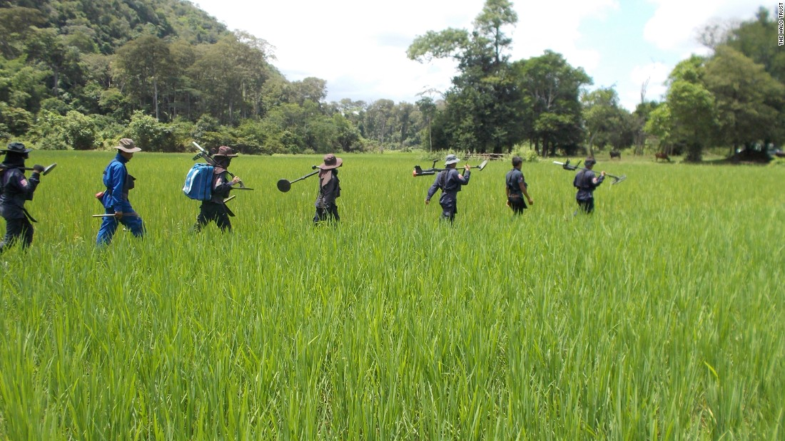A HALO team walks through a paddy field to get to work. Dense vegetation and a very wet rainy season can make the job difficult.