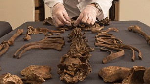DNA from ancient skeletons reveals cause of London's Great Plague