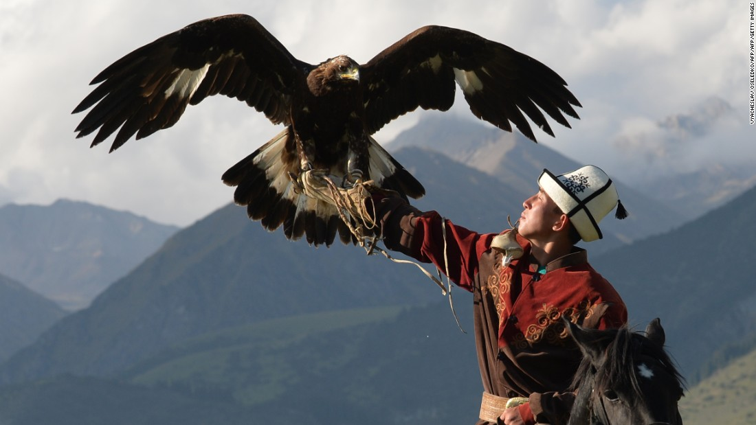 A Kyrgyz berkutchi -- an eagle hunter -- pictured in action in the Salbuurun event, which comprises of three different hunting techniques involving dogs and birds.