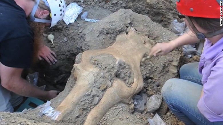 Rare intact mammoth skull found in California