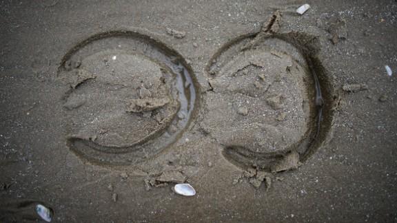 Fresh hoof prints in the Laytown sand.
