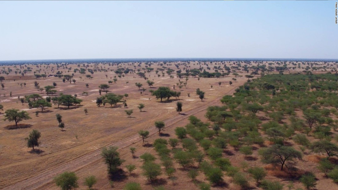 The Great Green Wall was conceived as a 7,700-kilometer tree belt stretching the length of the Sahara Desert.  Around 15% of the Wall has already been planted, largely in Senegal, where four million hectares have reportedly been restored.