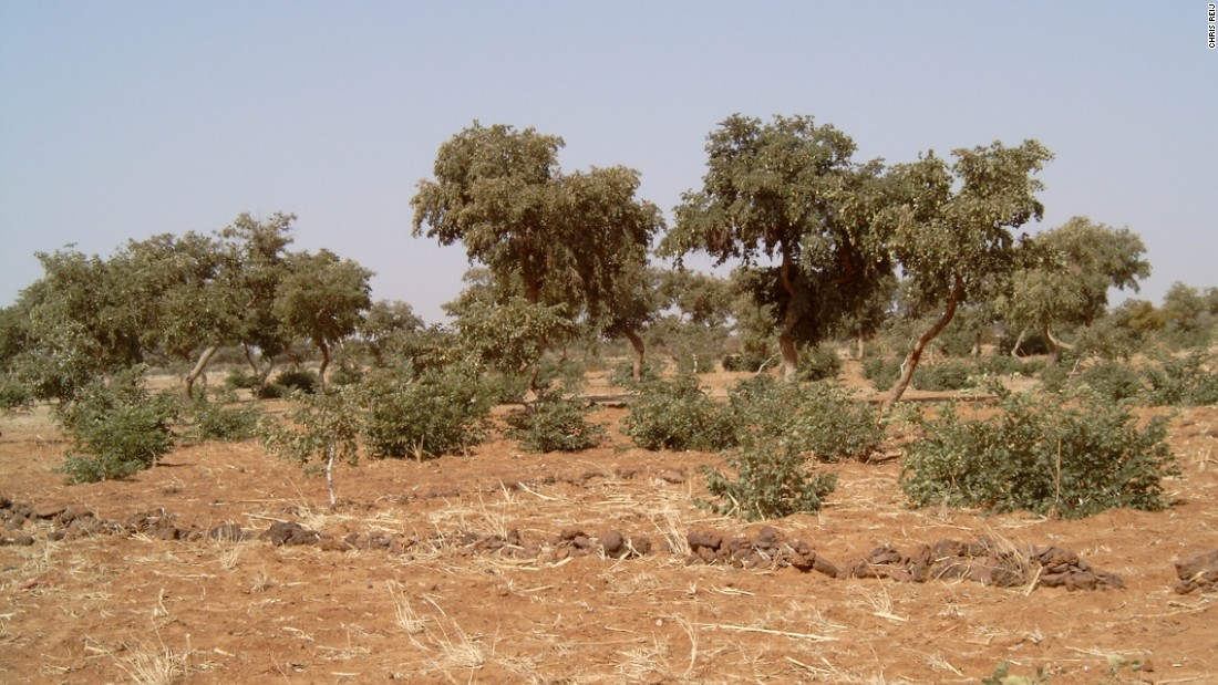 The $4 billion Great Green Wall changes course - CNN