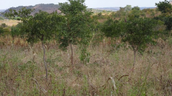 Farmer managed natural regeneration is beginning to spread through the Sahel region, and is delivering gains in countries such as Malawi.
