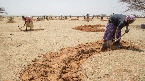 Niger farmers use innovative conservation techniques such as re-using the roots of dead trees, and digging half-moon pits for efficient water storage.