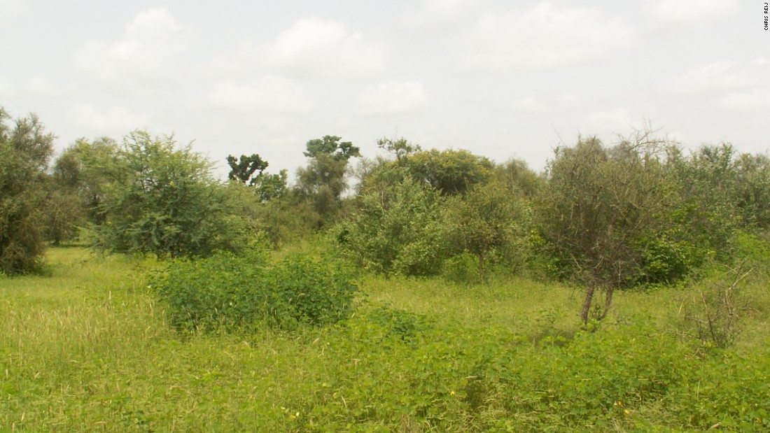 Tree planting had failed in this village in Senegal, which then flourished using the Niger model.