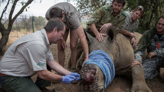 Rhinos, like this one pictured last year at the Pilanesberg National Park in South Africa, are attacked by poachers for their valuable horns.