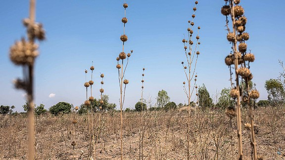 For example, this year, drought in Malawi has brought famine to the area, with over 60 million people dependent on food aid.