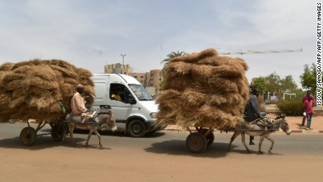 Donkeys transport straw through the district of Niamey, Niger.